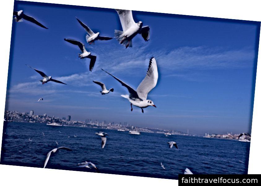 Hải âu và Bosphorus