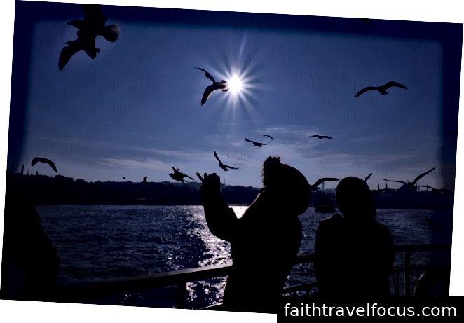 Chim hải âu và eo biển Bosphorus; Châu Á gặp Châu Âu
