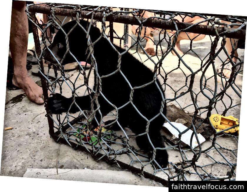 Xe tải khai thác gỗ - một lời nhắc nhở nghiêm khắc về nạn phá rừng; một con khỉ tội nghiệp bị nhốt trong một cái lồng nhỏ; một con gấu chó rất hiếm đang bị giam cầm.
