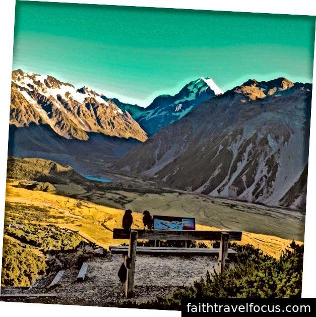 hình ảnh nhìn ra núi nấu với chim kea của tôi