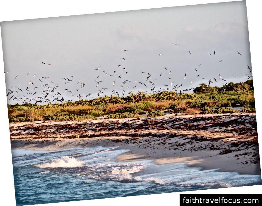 Bức ảnh về thuộc địa chim bồ câu trên Bush Key được chụp ngay sau khi chúng tôi đến. Khi chúng tôi rời đi, đã có nhiều lần những con chim xoáy trên đầu.