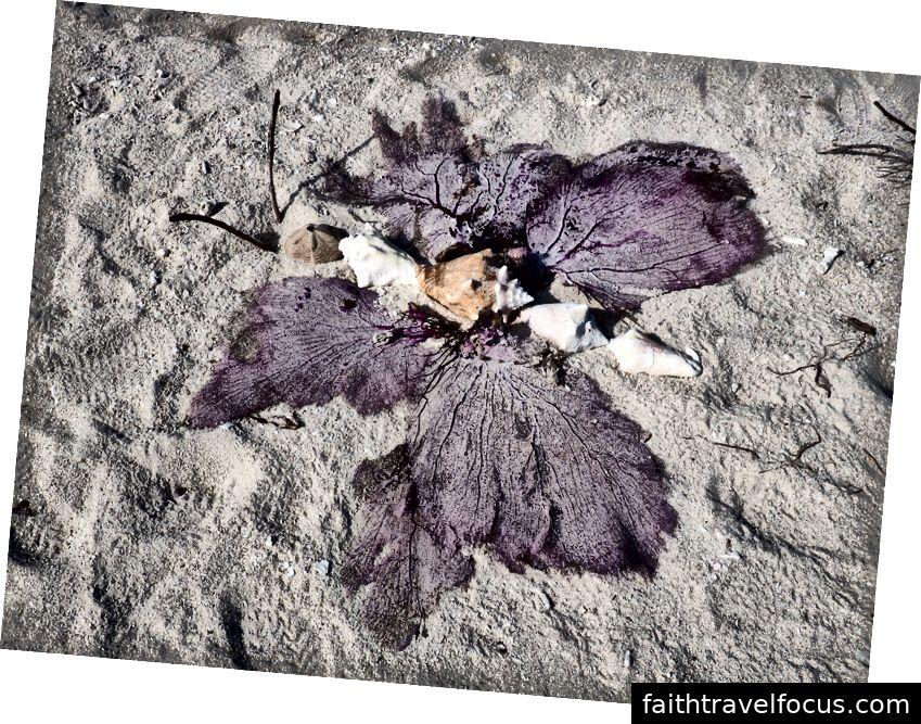 Một số người sáng tạo đã đưa một số người hâm mộ biển vào hỗn hợp và tạo ra con bướm này trên bãi biển tại Bush Key.