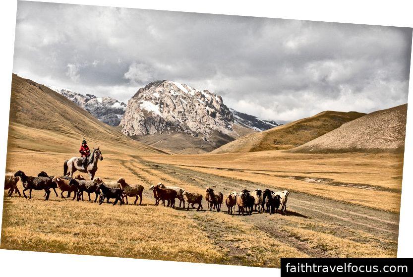 Một người chăn cừu và cừu của mình ở vùng núi của Kyrgyzstan
