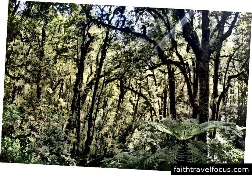 Khu rừng trên đường đi bộ đến The Chasm
