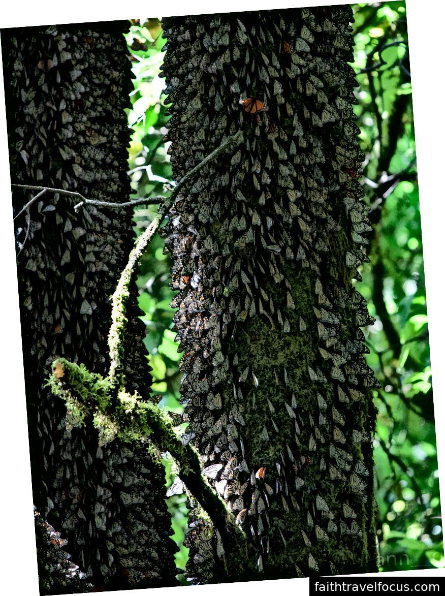 Một thuộc địa nhỏ của người Viking đang nghỉ ngơi trên cây