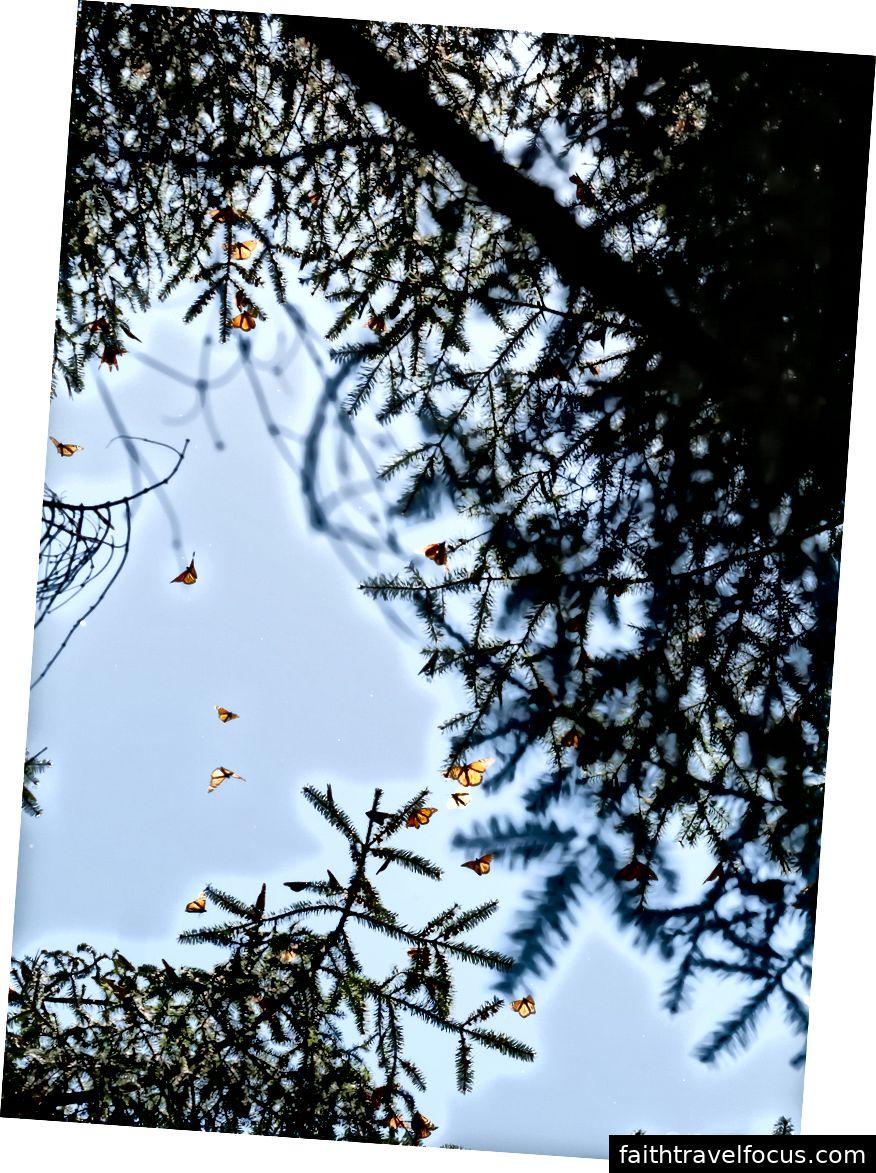 Thật nhiều bướm!