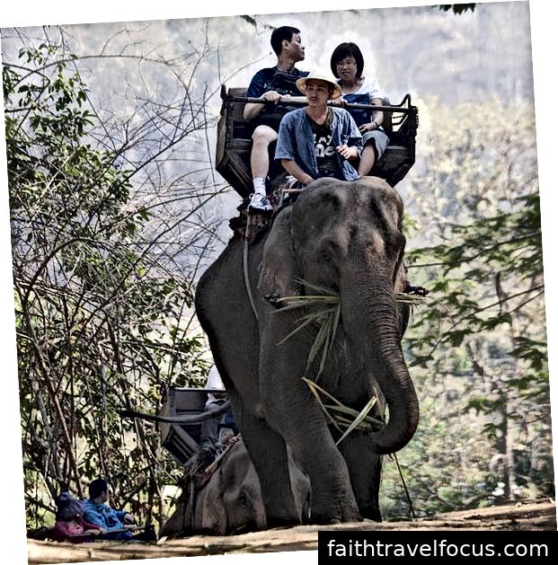 Khách du lịch thường được đề nghị đi cưỡi voi