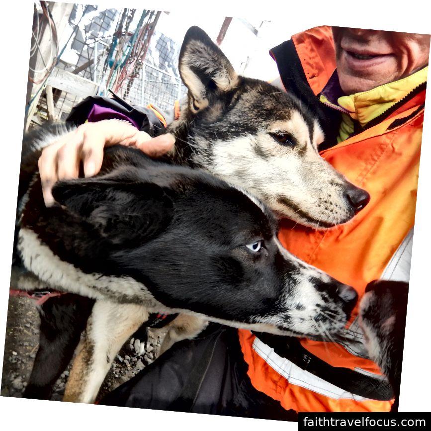 Spitzhunde, Norwegen, in der Nähe des Polarkreises Bildnachweis: Julia Hubbel