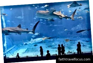 พิพิธภัณฑ์สัตว์น้ำดูไบและสวนสัตว์ใต้น้ำ