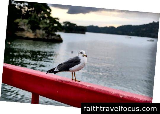 Người đẹp Matsushima ushima