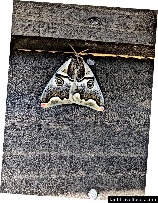 Kiểm tra sâu bướm rất mát mẻ này!