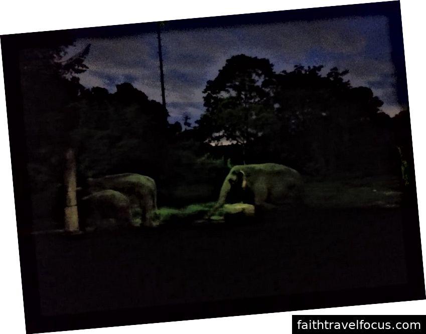 Voi tại Night Safari
