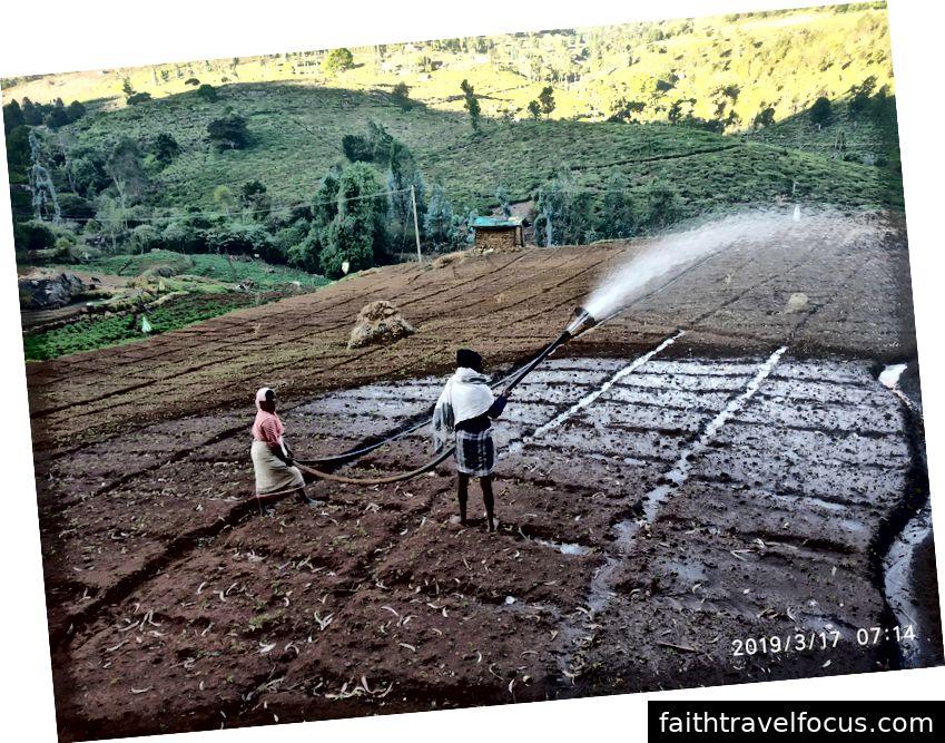 Lĩnh vực nông nghiệp