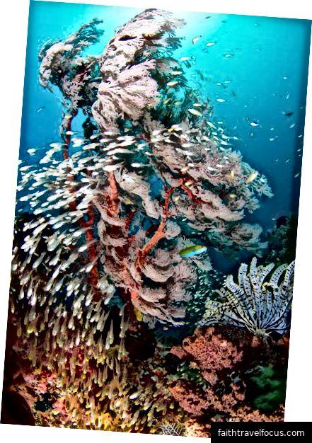 dưới nước tuyệt vời