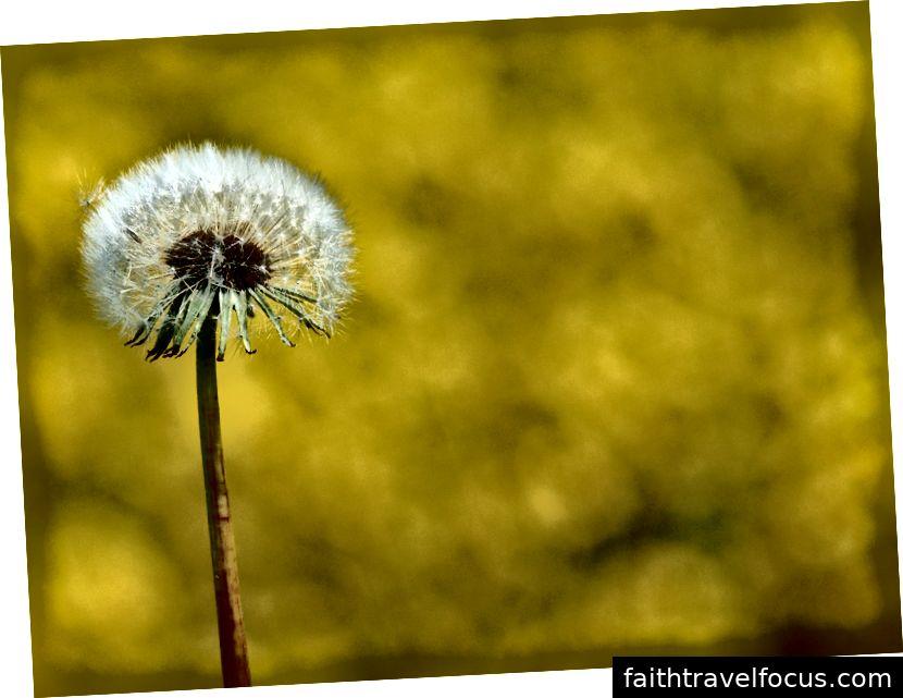 Một khởi đầu mới Hình ảnh lịch sự © freeimages.com