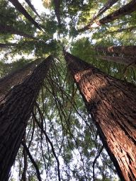 Từ cây dương xỉ đến cây gỗ đỏ