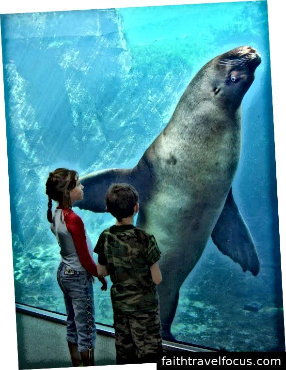 Tôi (trái) và em trai Matthew (phải) của tôi đang xem con sư tử biển 2.400 pound tên là Woody, trong khi nó nhìn chúng tôi.
