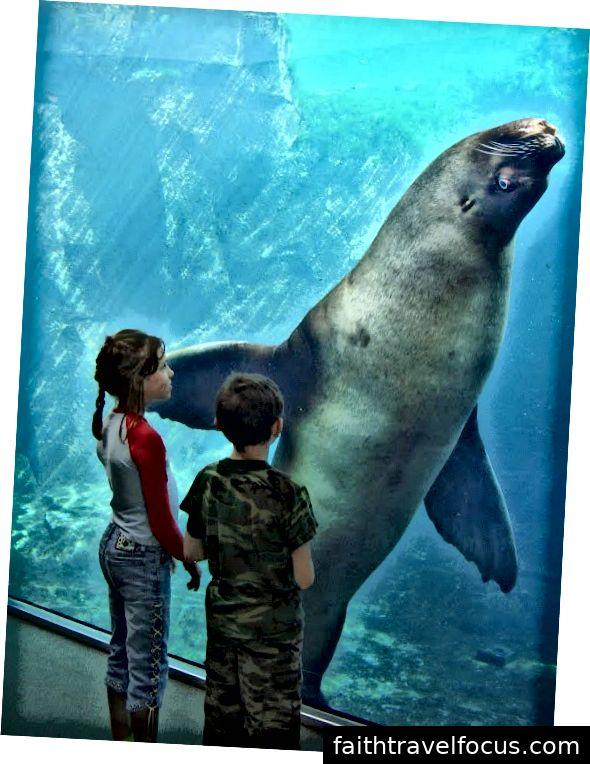 Tôi nhỏ (trái) và em trai Matthew của tôi (phải) ngắm con sư tử biển nặng 2.400 pound tên là Woody, trong khi nó nhìn chúng tôi.