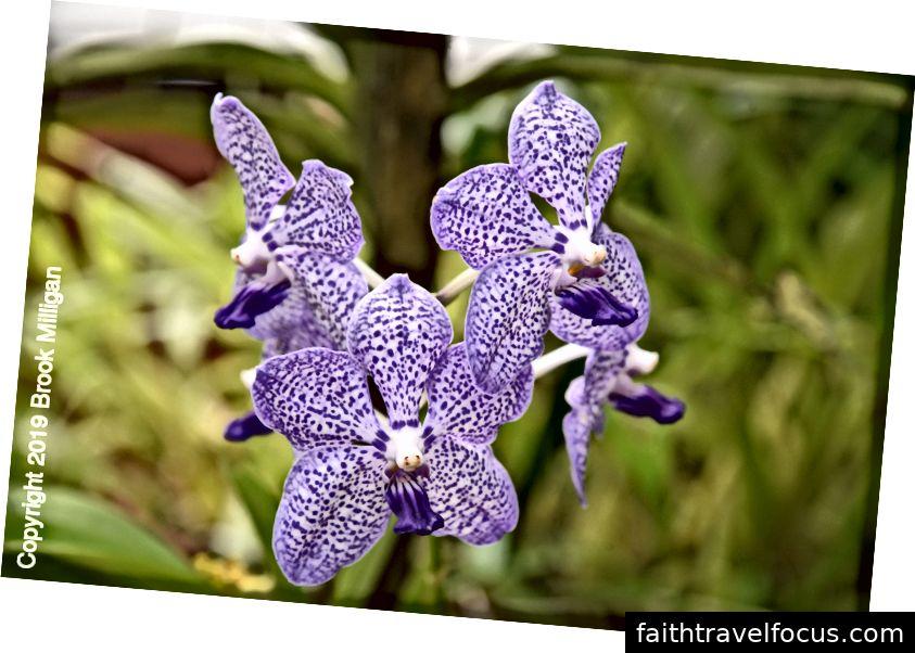 Những khu vườn có một ngôi nhà phong lan tuyệt đẹp. Đây chỉ là một trong nhiều hoa mà chúng ta đã thấy.