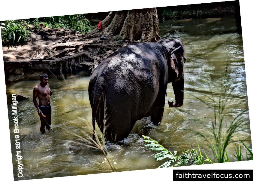 Chú voi con đang tắm