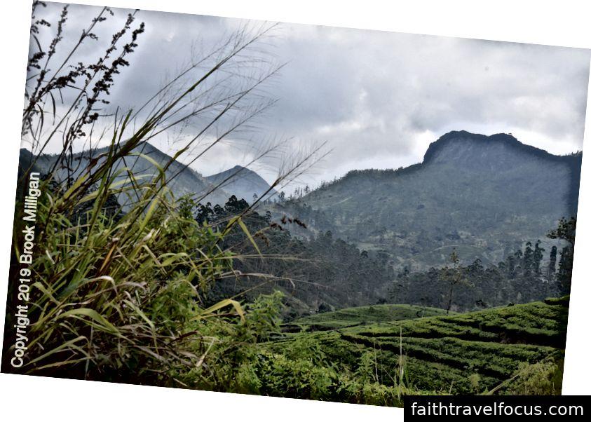 Địa hình gồ ghề của các đồn điền trà