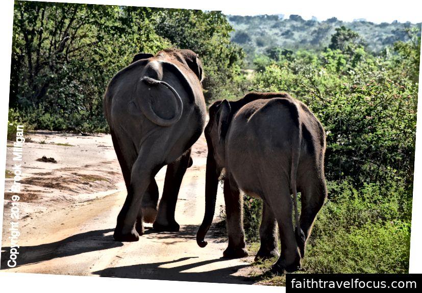 Một con voi mẹ và con