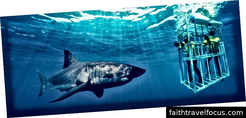 Lặn cá mập: southafricapackages.com