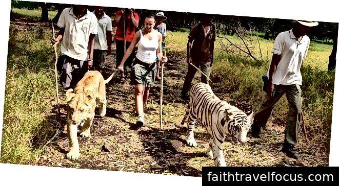 Đi bộ với những con sư tử: southafricapackages.com