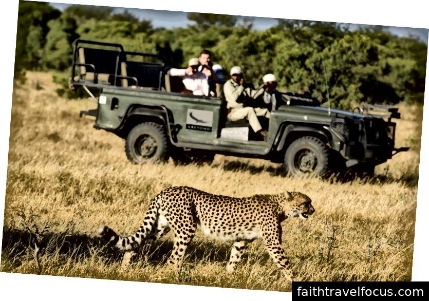 jhalana báo safari