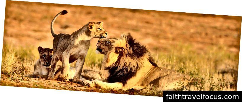 tour du lịch Nam Phi safari