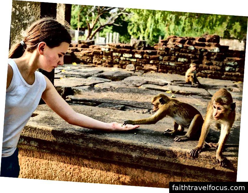Осъществяване на маймунски приятели в Polonnaruwa