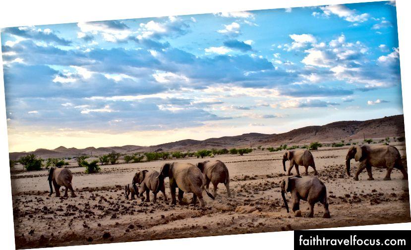 Слоны роуминг в Дамараленд, Намибия. Бен Ху