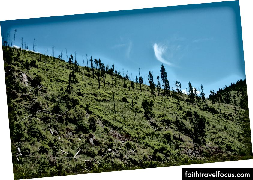 Dette var en tett skog. Fujifilm X-Pro 2 + XF 23mm: 1/600 @ ƒ / 8, ISO 200