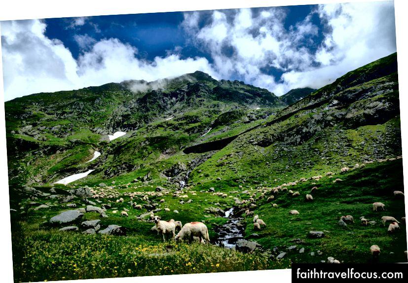Црвена боја помаже пастирима да идентификују своје овце када се пасе у близини другог стада. Фујифилм Кс-Про 2 + 14мм: 1/2700 @ ƒ / 2.8 ИСО 400
