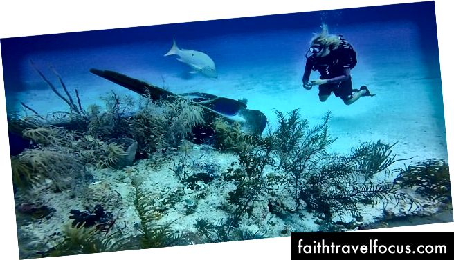 Biodiversiteitsverlies [koraalriffen, mangroven]