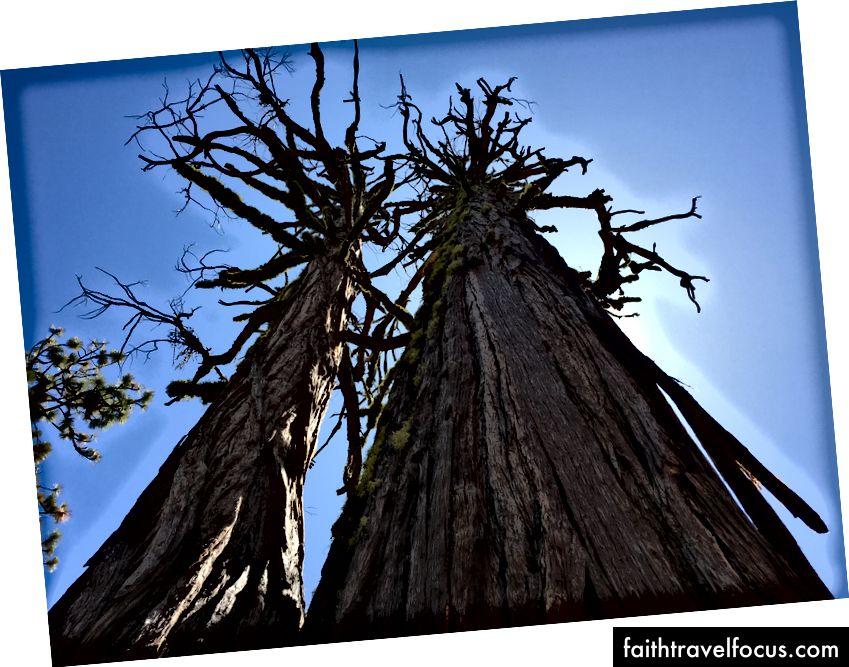 Cây Sequoia khổng lồ cho mình mượn những bức ảnh ấn tượng.