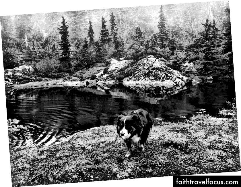 Gamgee đã phát hiện ra nước trong chuyến đi ở British Columbia, Canada