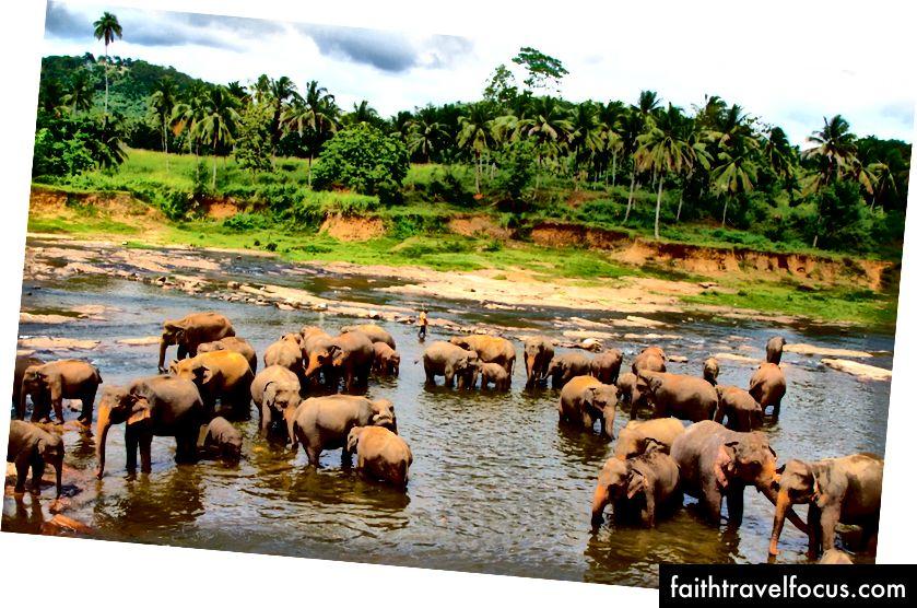 Pinnawela, Sri Lanka