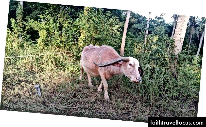 Taj je mali momak primijećen u mojoj blizini (fotografija sa ploče zajednice Samui)
