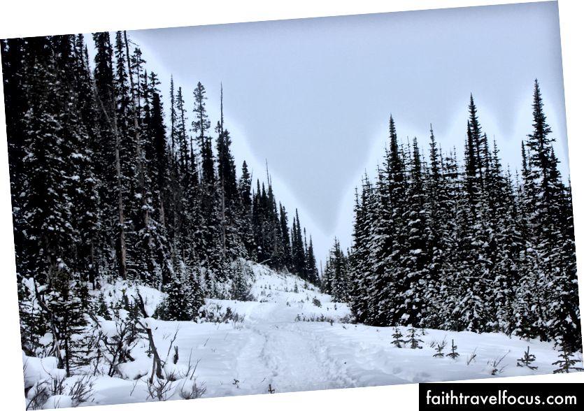 Đường mòn Snowshoe Hồ Cá, Canmore AB
