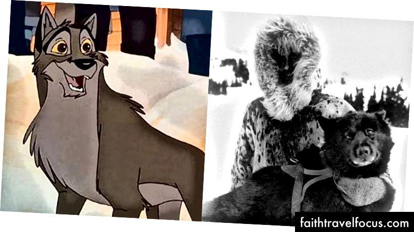 Balto thực sự bên cạnh hoạt hình. (Ảnh lịch sử qua PBS.org)