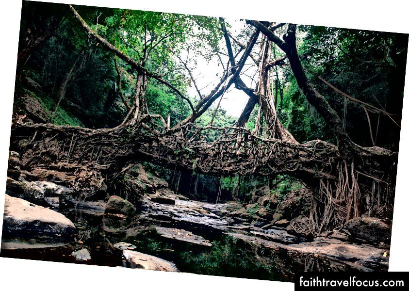 Cầu sống duy nhất trên thế giới (ở Meghalaya)