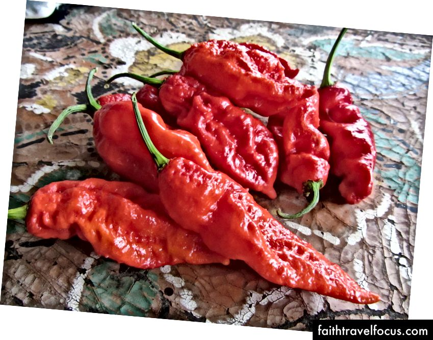 Bhoot Jolokia - ớt cay nhất thế giới