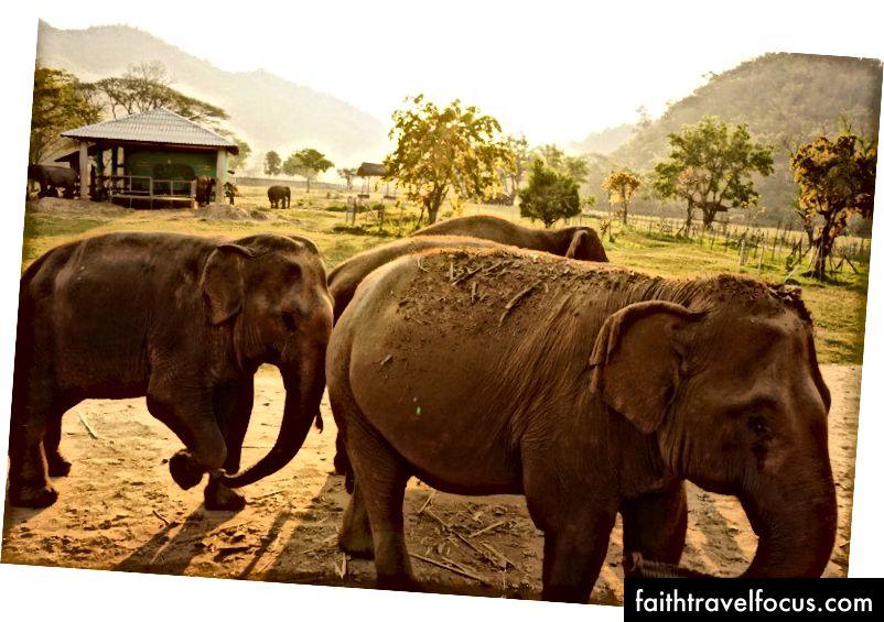 safari issiqlik