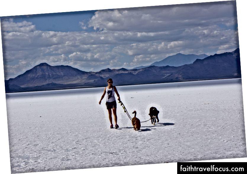 Đường vấp ngã Hoa Kỳ với những con chó của chúng tôi. Ở đây chúng tôi đã ở căn hộ Salt ở phía bắc Utah.