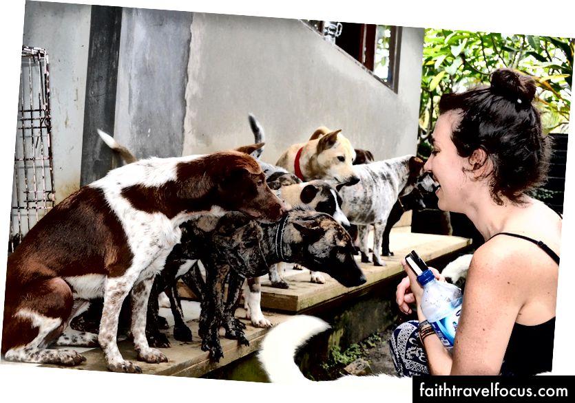 Собаки, що врятувались, у будинку усиновлення BAWA в Убуді | © Ніккі Варгас