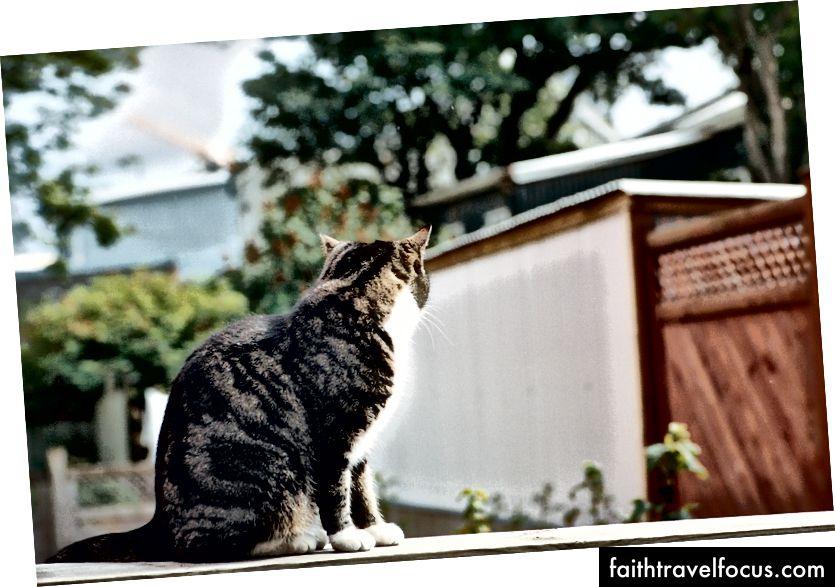 Một trong những con mèo huyền thoại ở Reykjavik không muốn làm gì với các nhiếp ảnh gia của Estonia.
