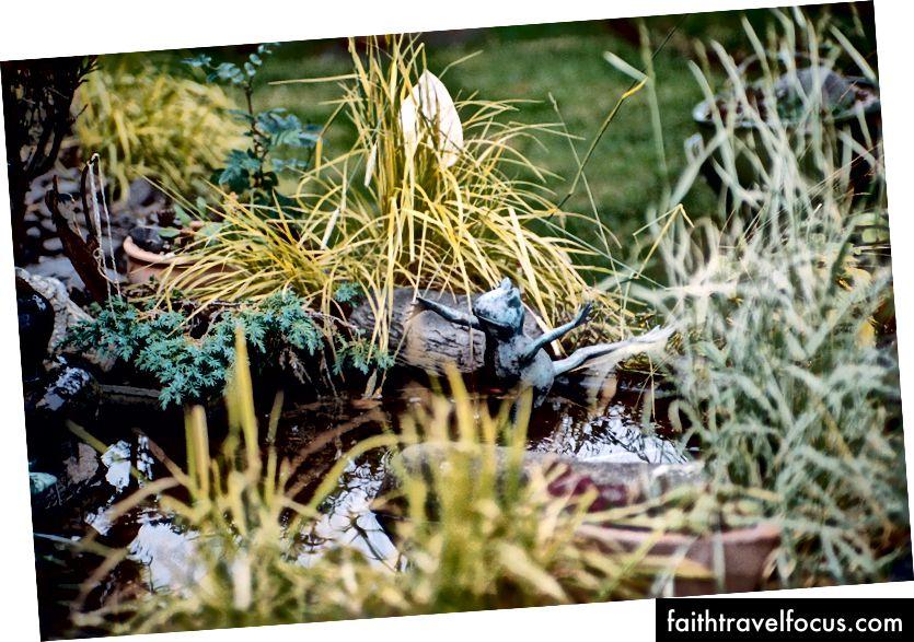 Chỉ là một con ếch ba lê Iceland thông thường tận hưởng thời gian của họ trong một phần nước trang trí.