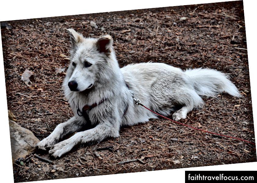 Con chó buồn nhất ở Durango.