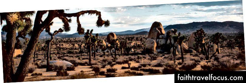 Hình ảnh lịch sự của Dịch vụ Công viên Quốc gia